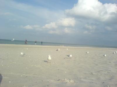 dumme weiße Vögel